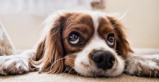 Assurance animal de compagnie sans délai de carence ni franchise