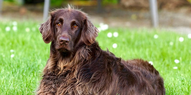 Assurance animal de compagnie sans tatouage ni puce d'identification