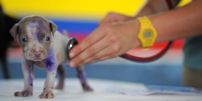 5 astuces pour payer moins de frais vétérinaires pour votre animal !