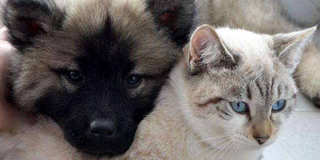 Quel est le prix d'une assurance pour animal de compagnie ?