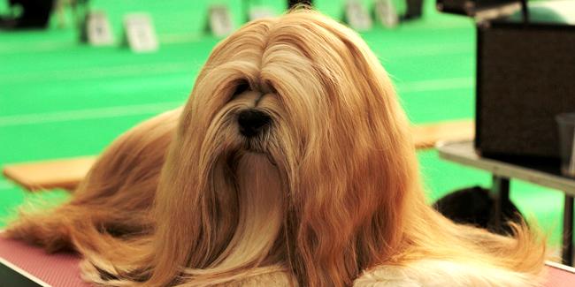 Assurance pour animaux de concours avec pedigree