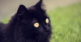 Prix et devis assurance animaux de compagnie pour trouver la moins chère ?