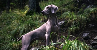 Assurance animal de compagnie sans limite d'âge, est-ce que ça existe ?