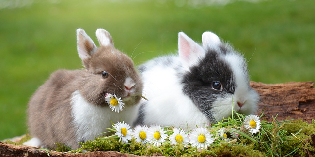 Assurance lapin de compagnie : devis, prix, comparateur