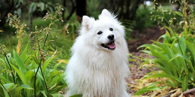 Quels sont les assureurs spécialisés en assurance pour animaux ?