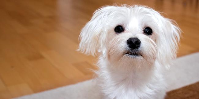 Devis assurance animaux de compagnie : comment les comparer et choisir ?