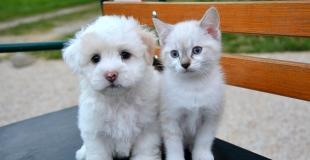 Comparer toutes les assurances pour animaux en moins de 3 minutes