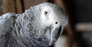 Assurance perroquet : devis, prix, comparateur