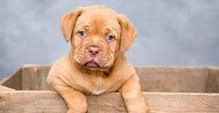 Une assurance pour animaux avec prise en charge à 100 % : est-ce que ça existe ?