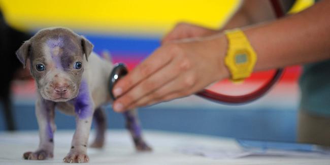 Quelles économies sur les frais vétérinaires grâce à une assurance pour animaux ?