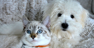 L'assurance chien et l'assurance chat ont-elles les mêmes caractéristiques ?