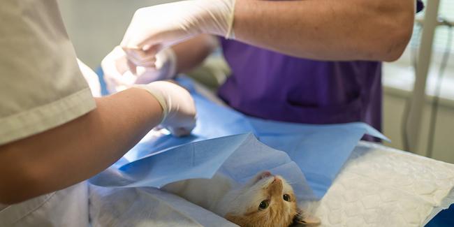 RC Pro pour vétérinaire : comparez, choisissez !