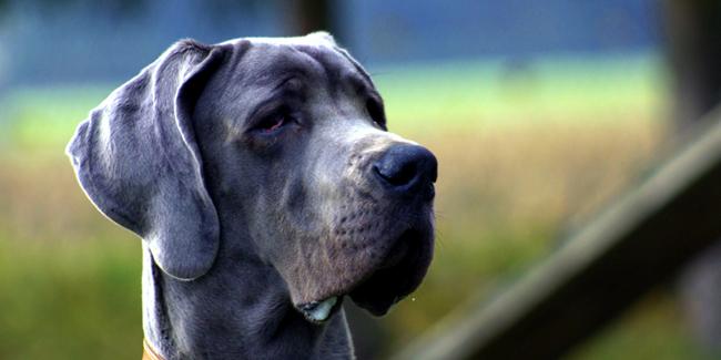 Trouver une assurance pour animaux sans plafond de remboursement
