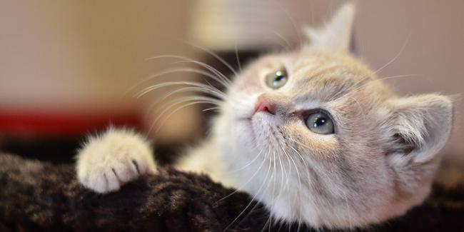 L'assurance pour animaux rembourse-t-elle les vaccins ?