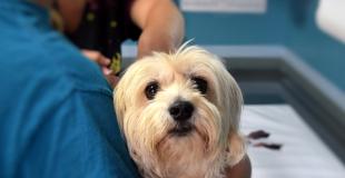 Vétérinaire : les clés pour choisir la meilleure Multirisque Professionnelle